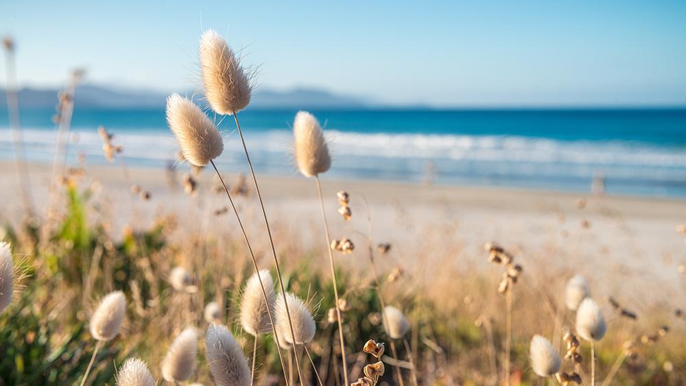 Native plants growing on Mangere coast