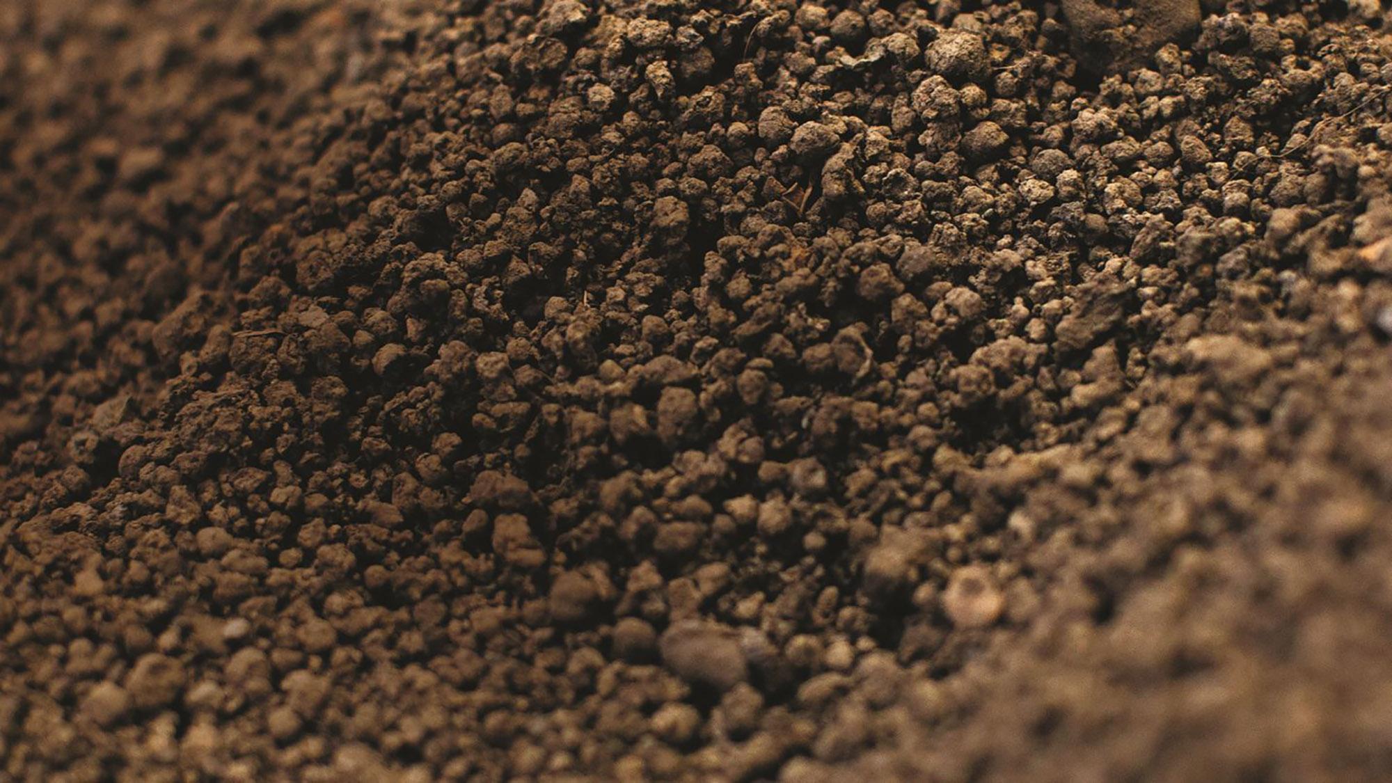 biosolids sludge header