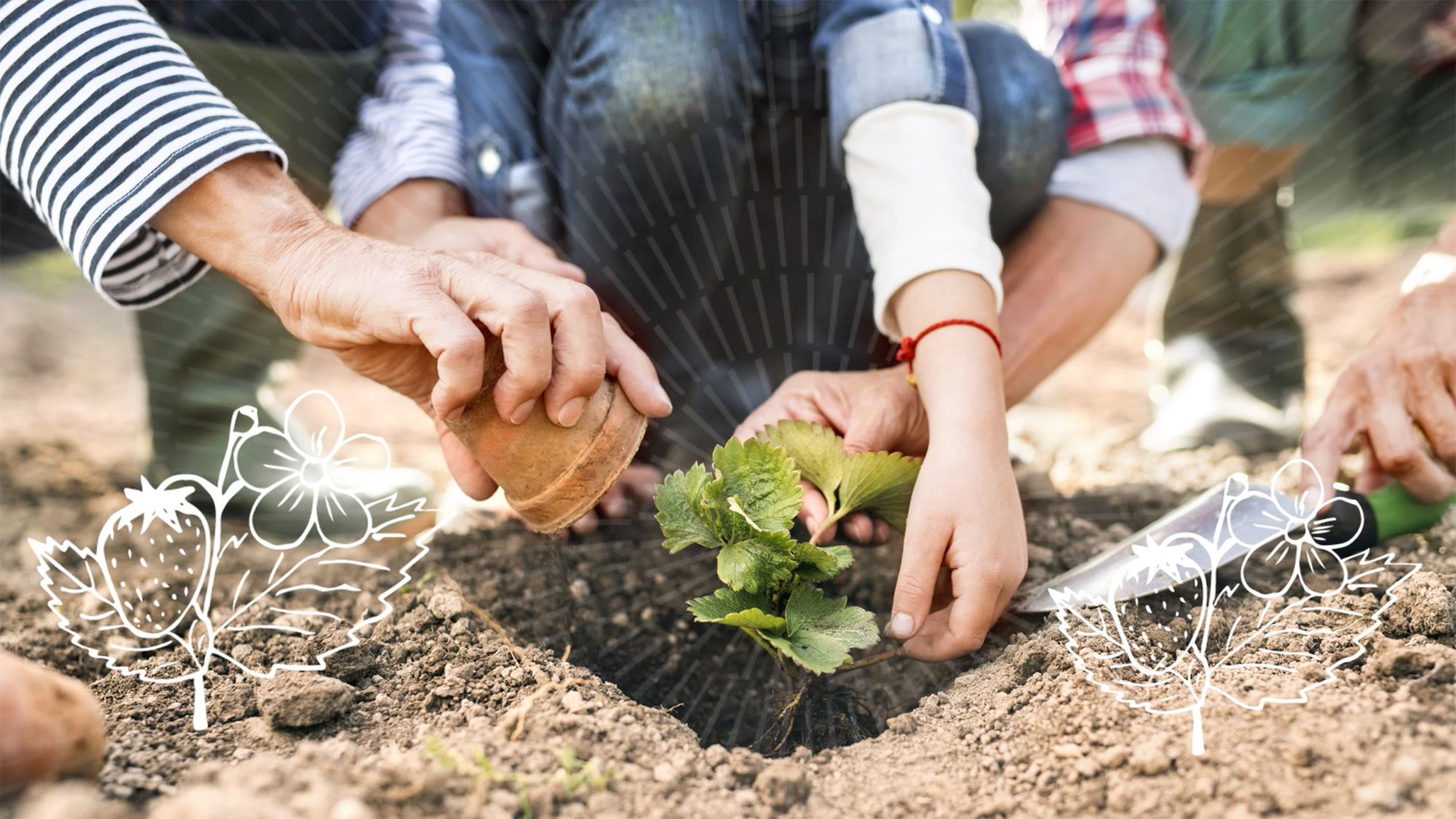 Family planting a plant