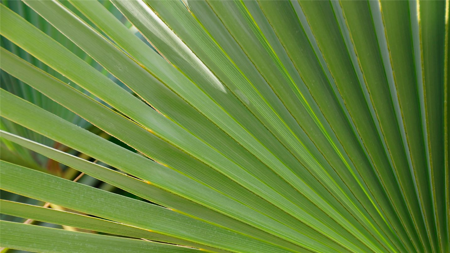 Recycling tips palm trees and fronds