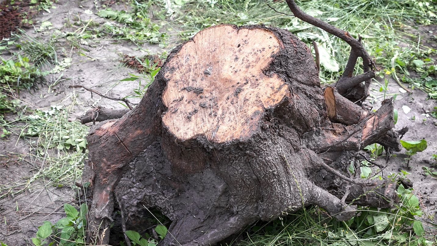Recycling tips tree trunks and roots