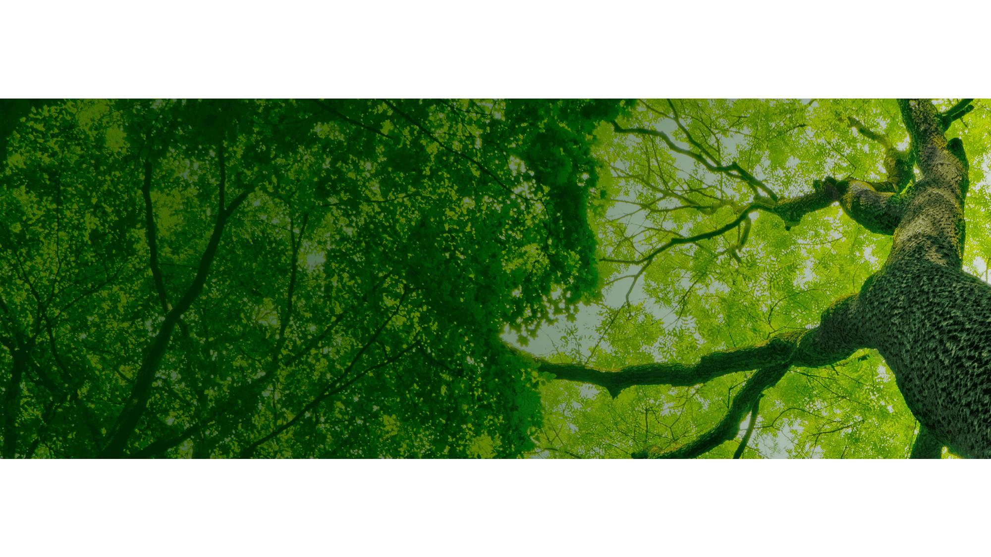 bomen top banner