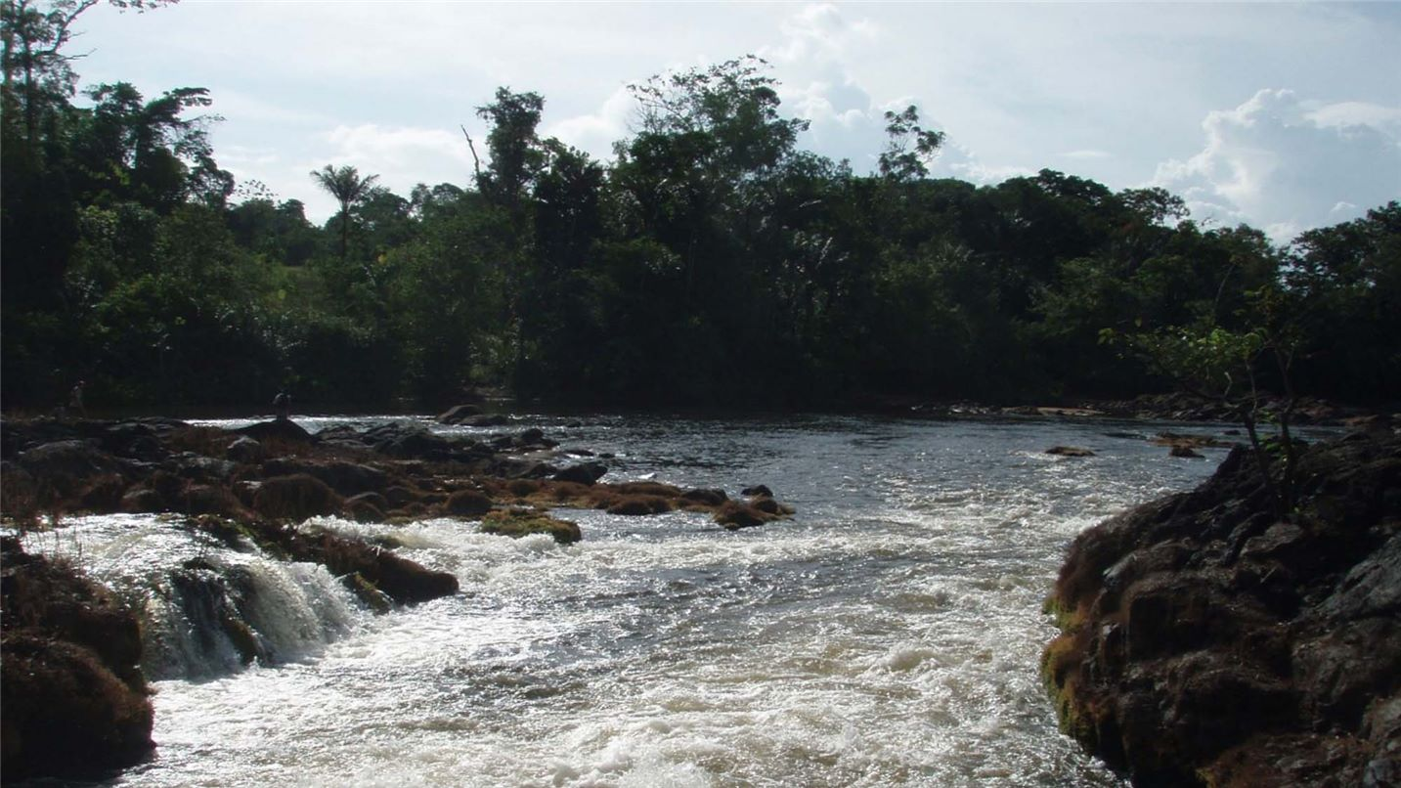 Guyanaise des eaux Favard