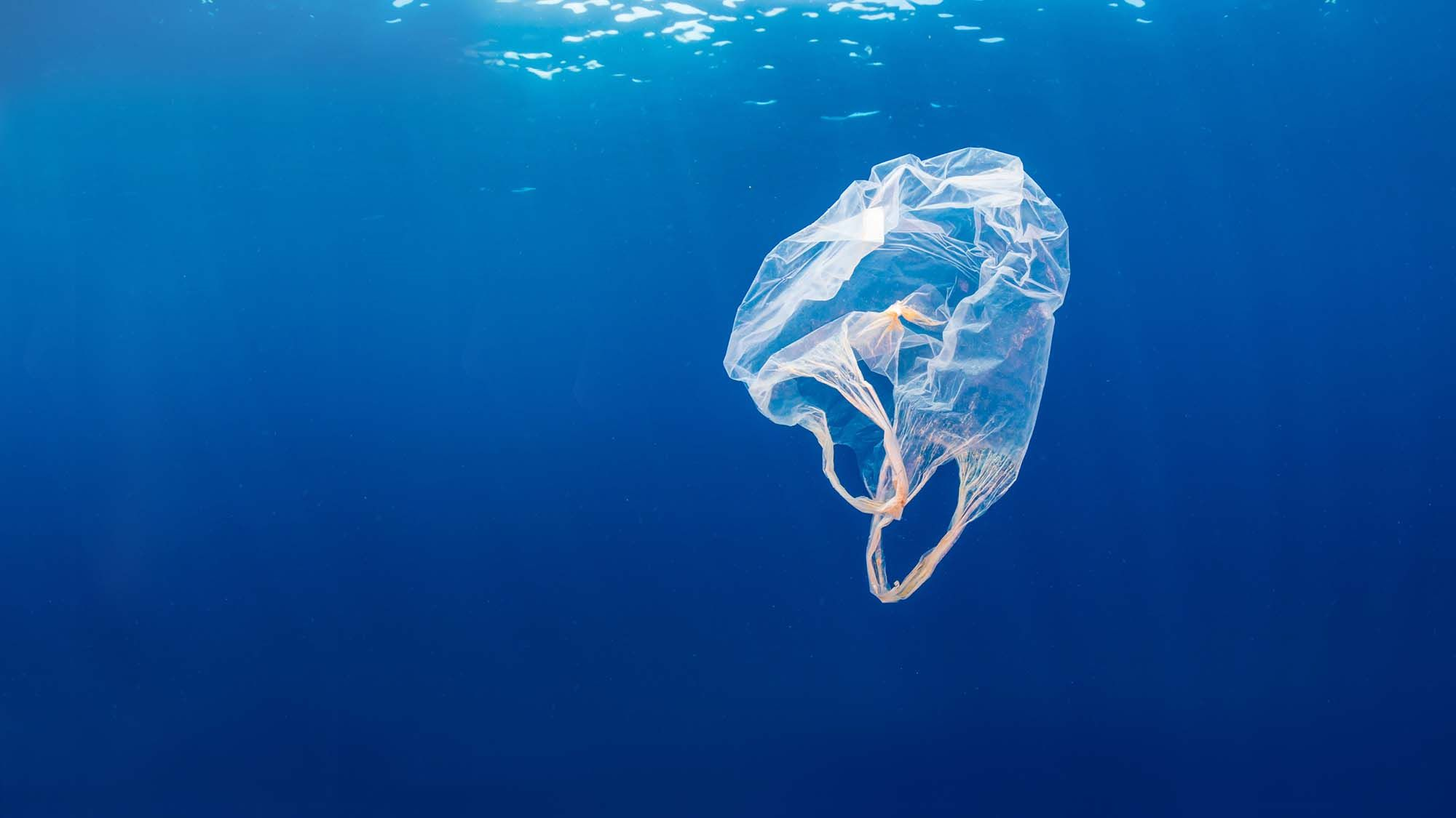 Journee mondiale Oceans 2019