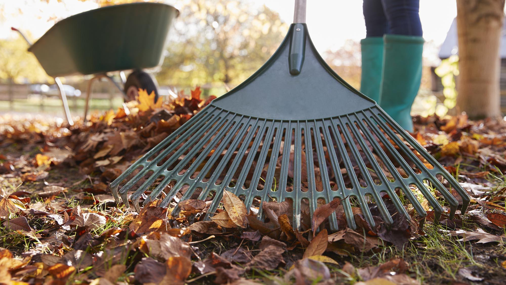 ramassage feuilles