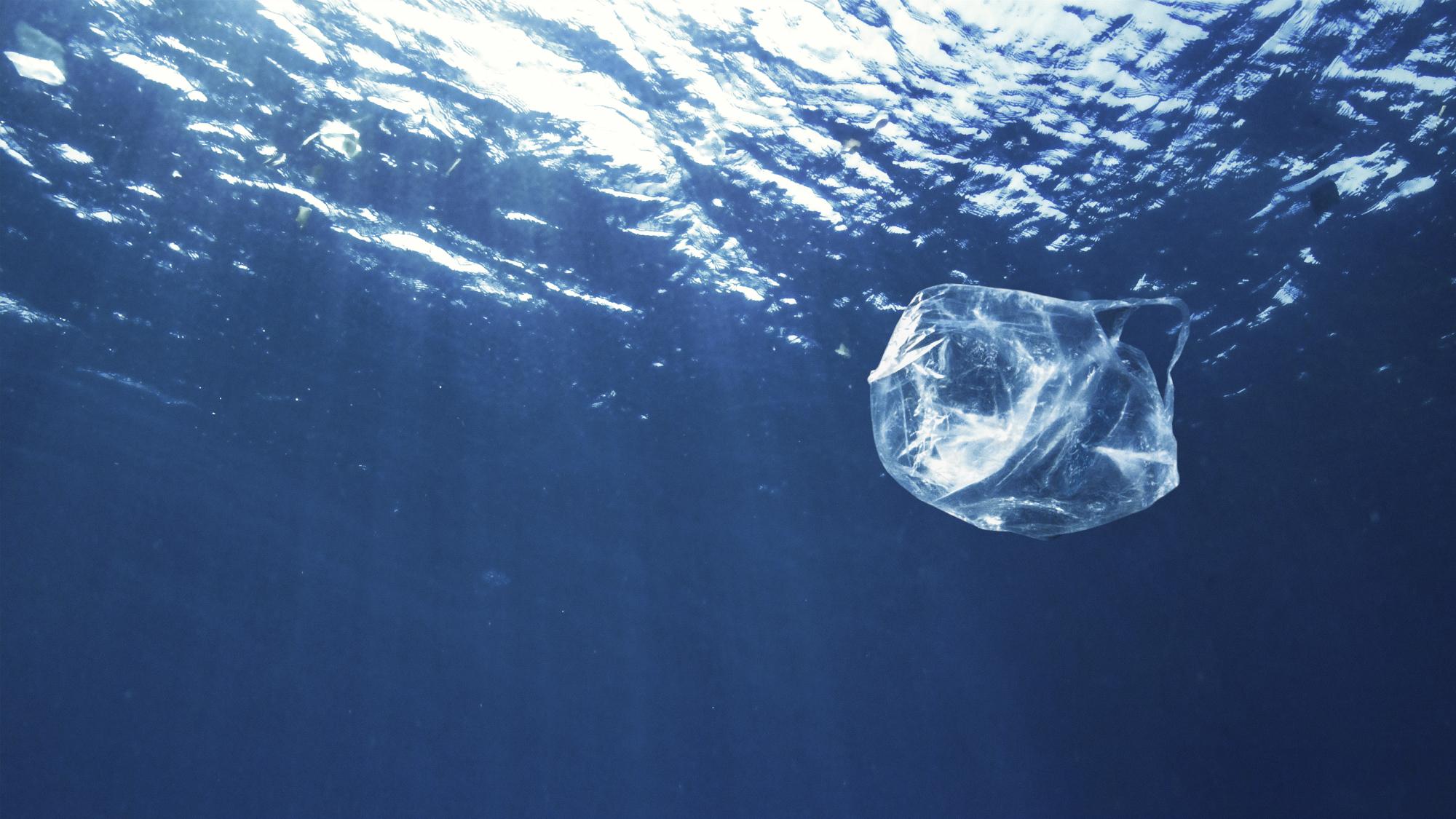 Journée mondiae des océans