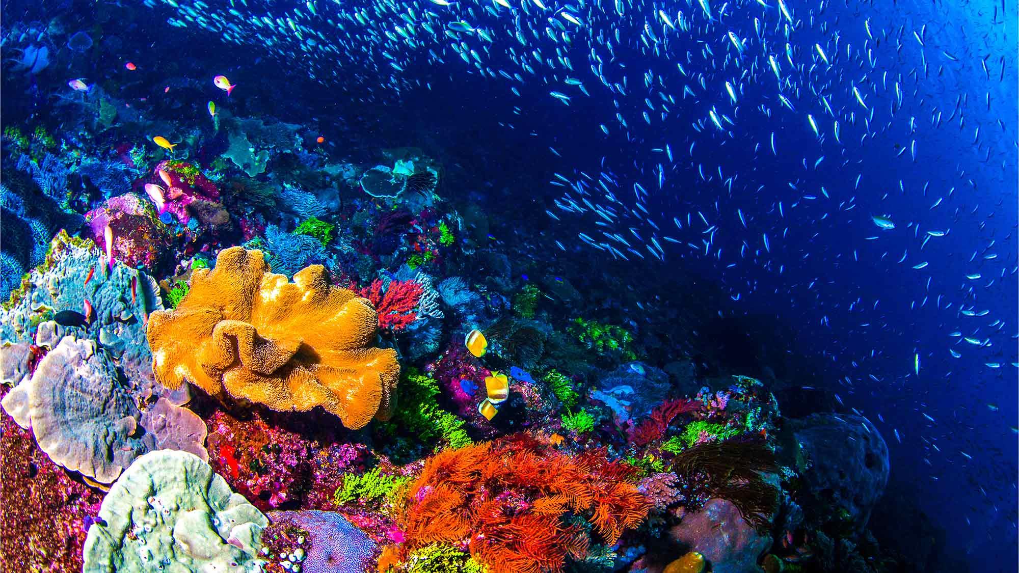 australia aquarium