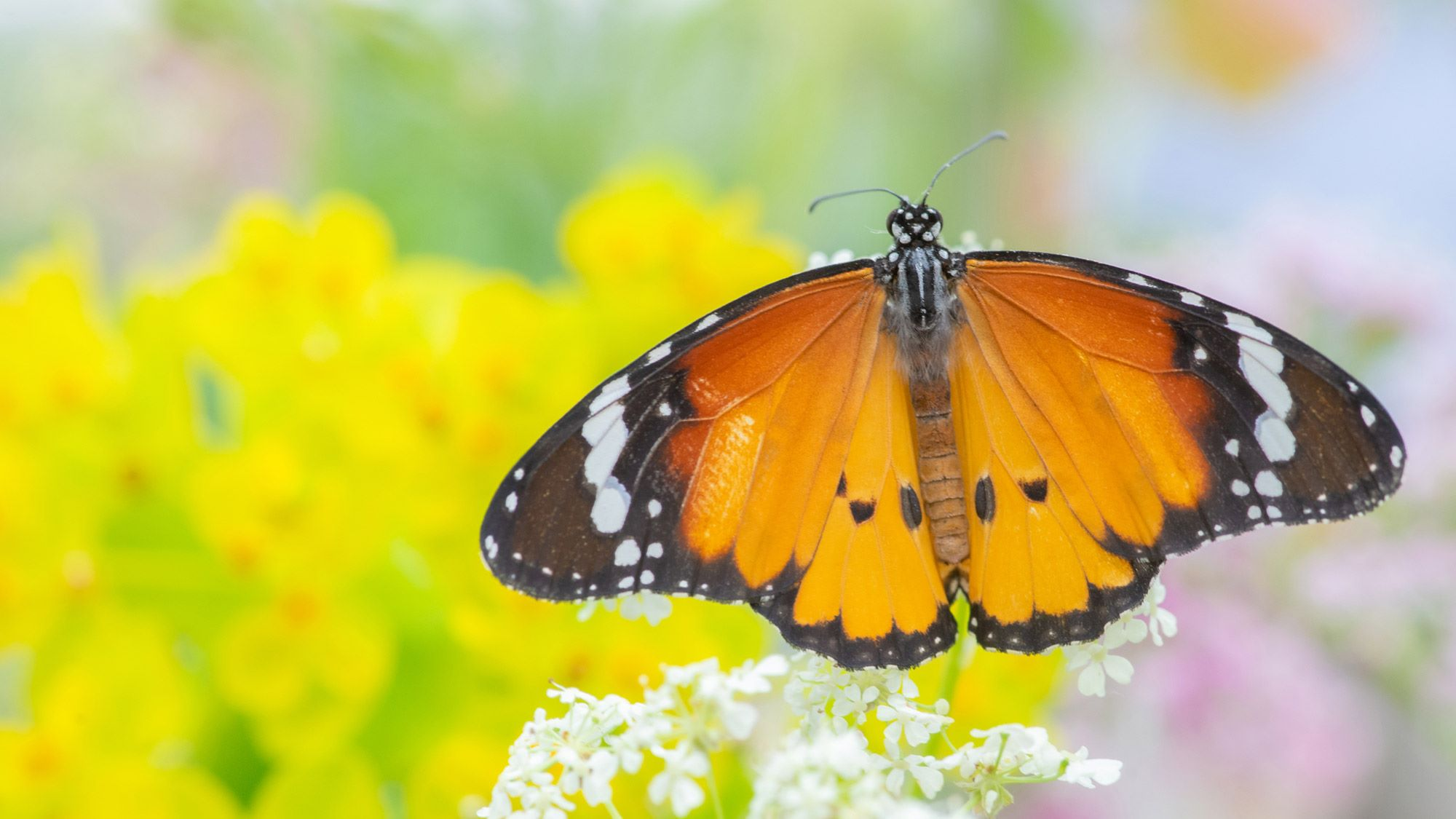 butterfly biodiversity homepage