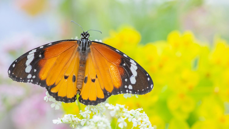 butterfly biodiversity