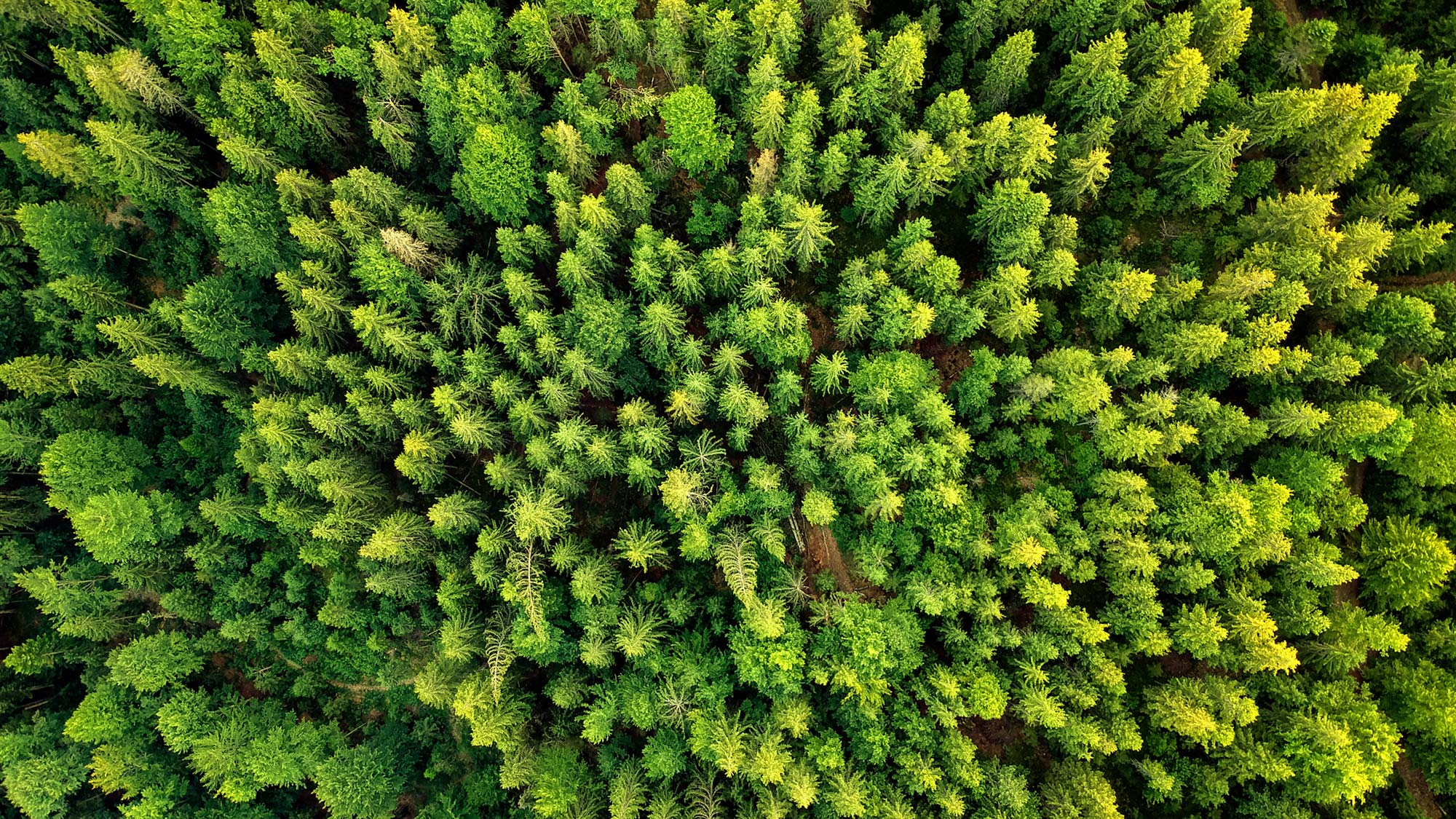 forest aerial climate