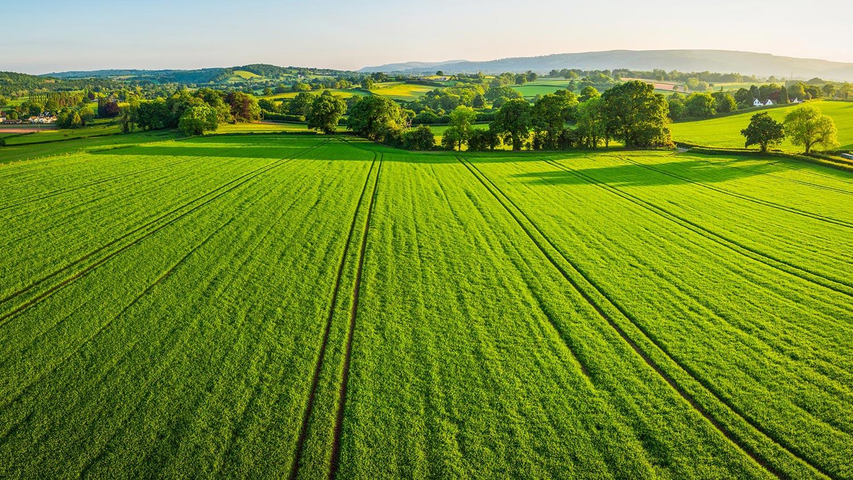 green grass sky header news