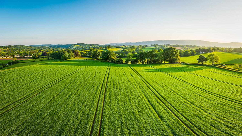 green grass sky header