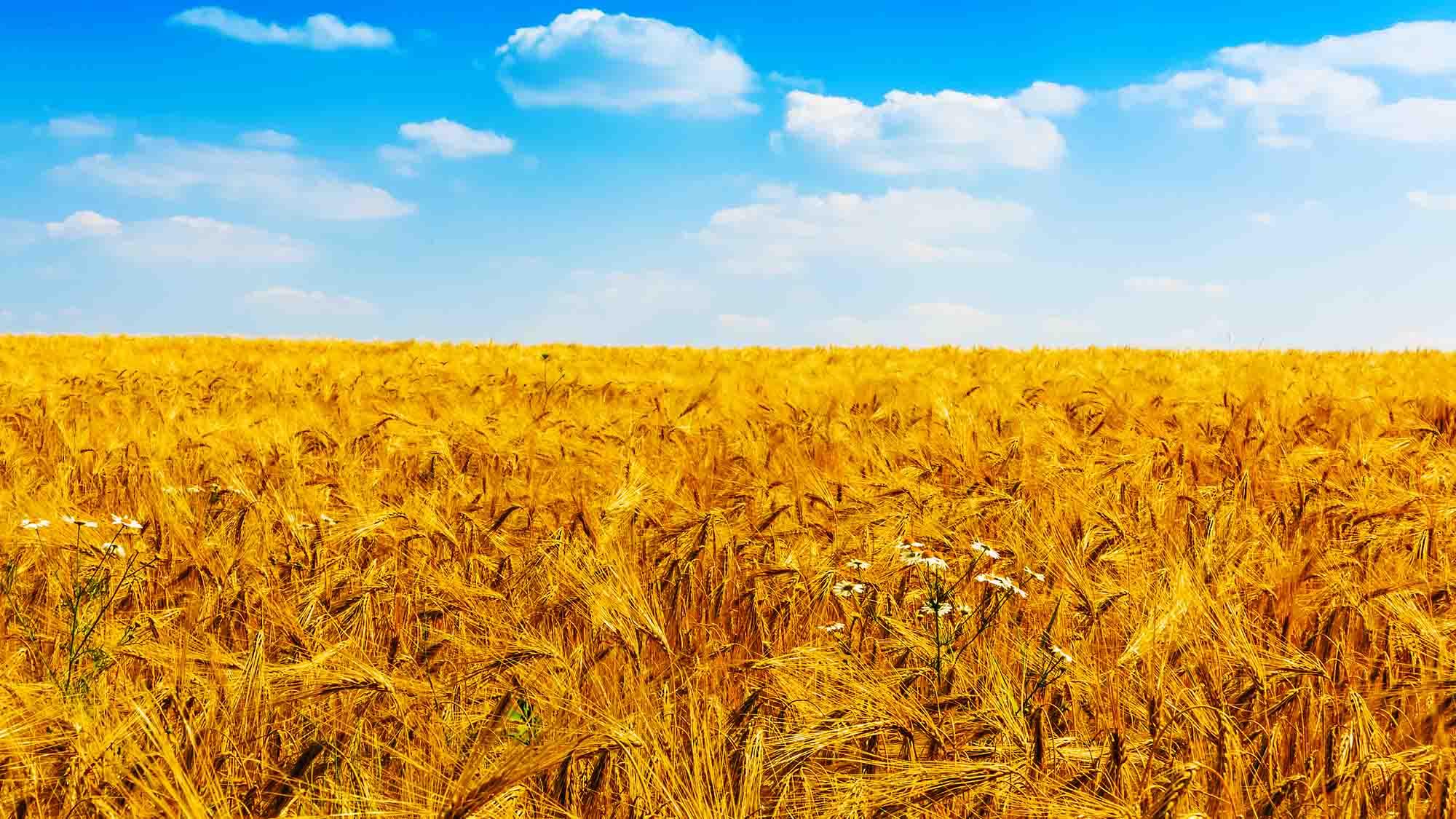 Header Agriculture