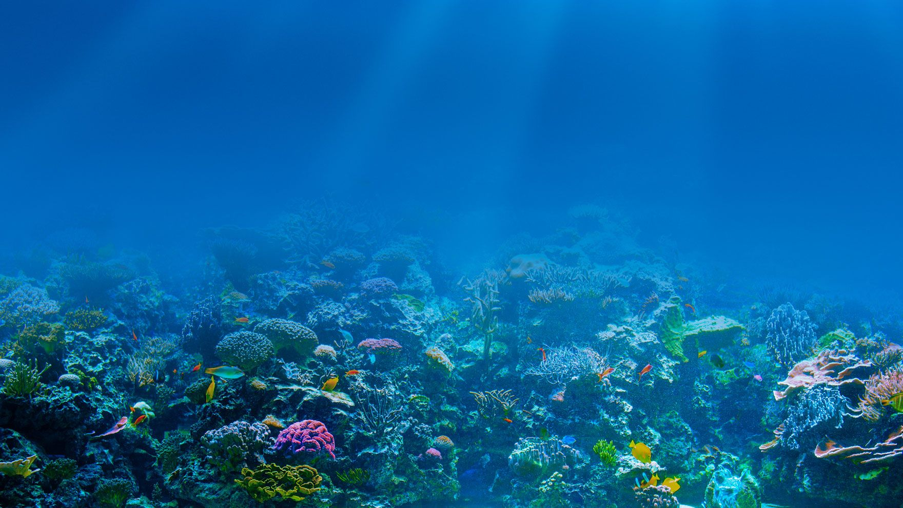 Protect the oceans