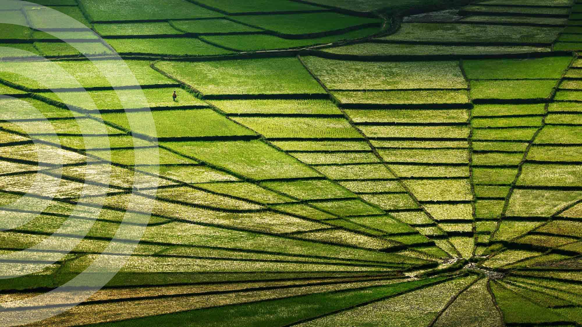 green grass news