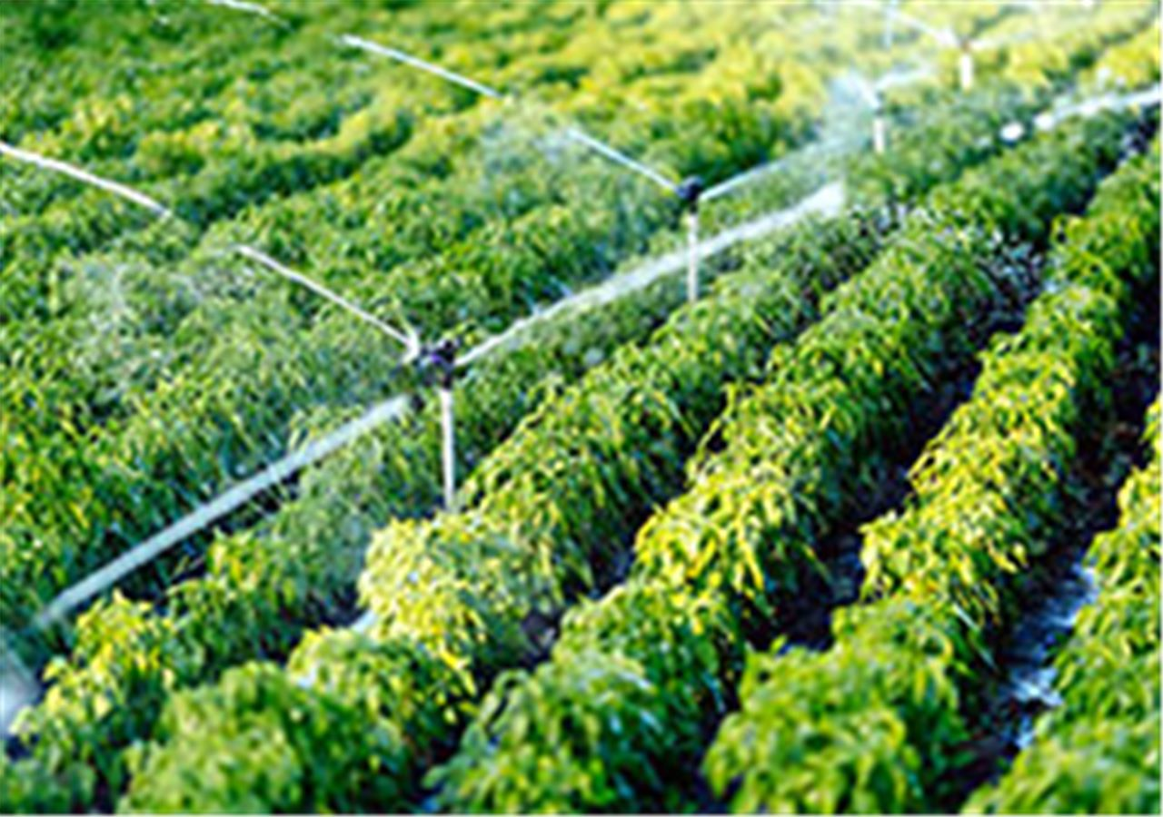 Agricultural watering