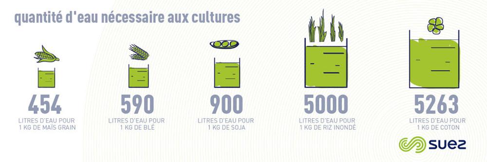 Infographie, quantité d'eau nécessaire aux cultures
