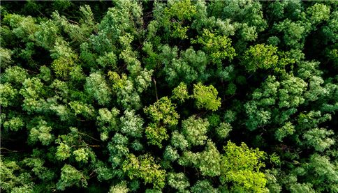 Aerial view of a lush green forest or woodland looking down on the tree tops in a full frame view