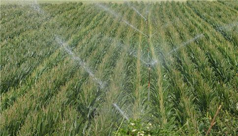 Agricultural field watering