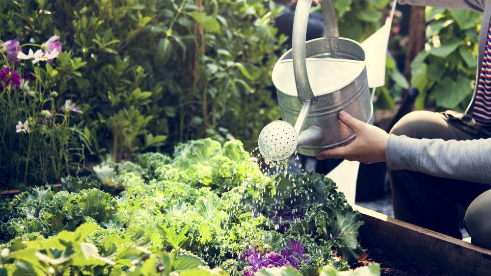 Covid 19 gestes arrosage jardin