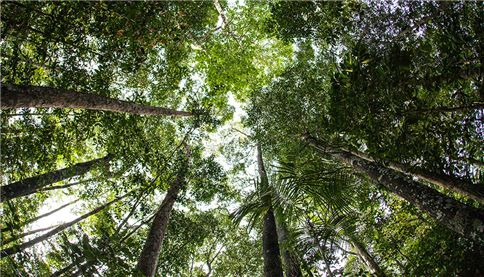 Sunlight filters through the thick, green canopy of a pristine rainforest in Raja Ampat, Indonesia. The forests here grow on nutrient poor soils.