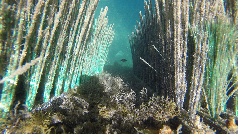 Fish sea Bionurse