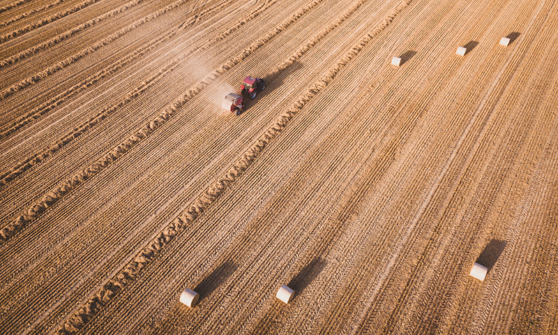20200213_wheat field  Ivan Bandura (3)
