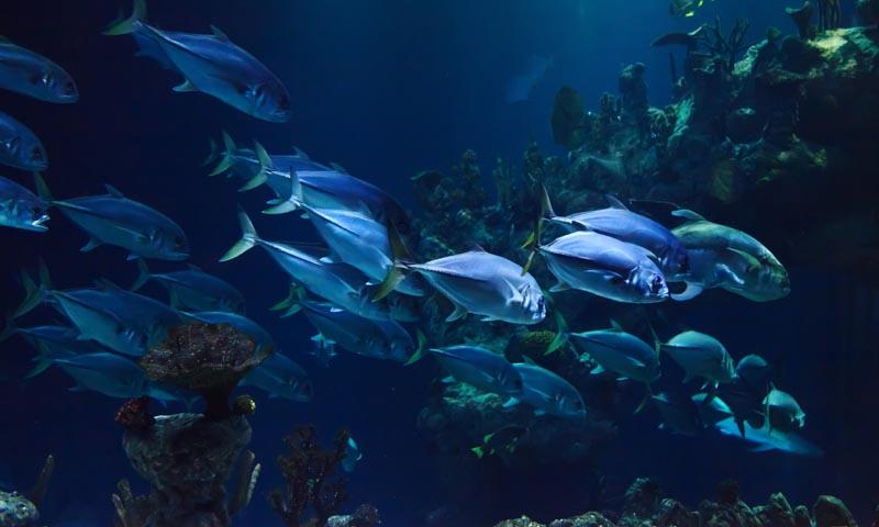 Ocean_3solutions_fondsmarins_1