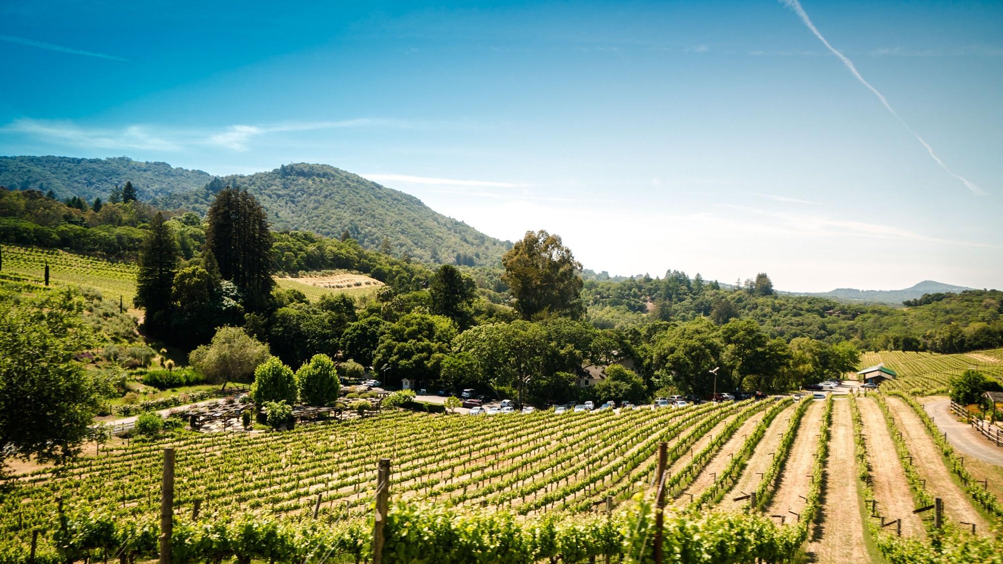 Imagem de uma vinícola