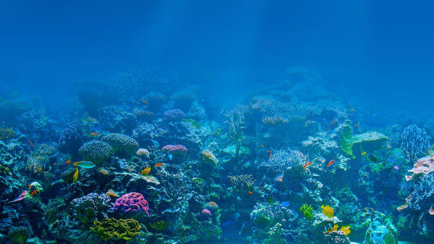 Proteger oceanos