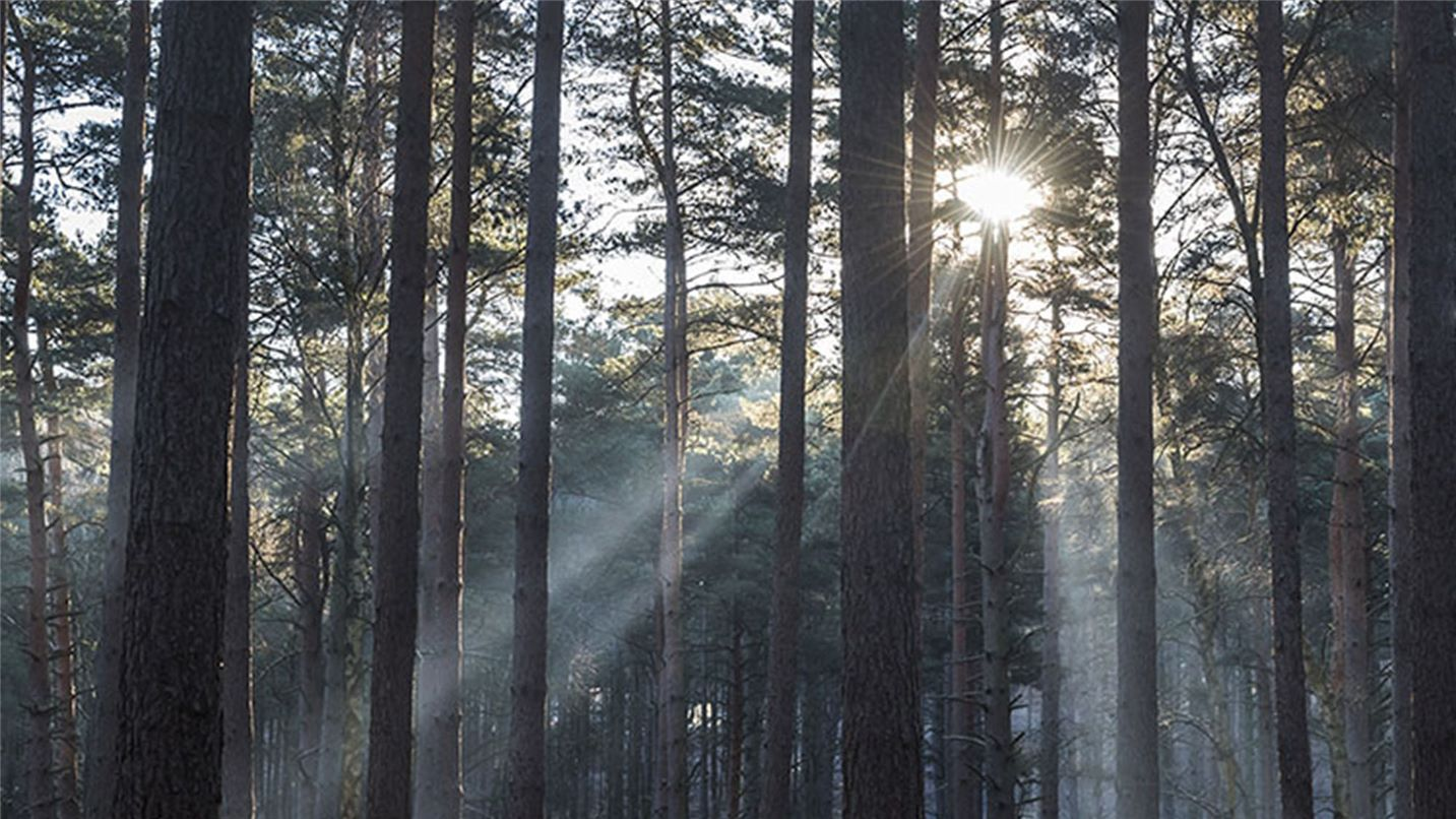 Bracknell Forest