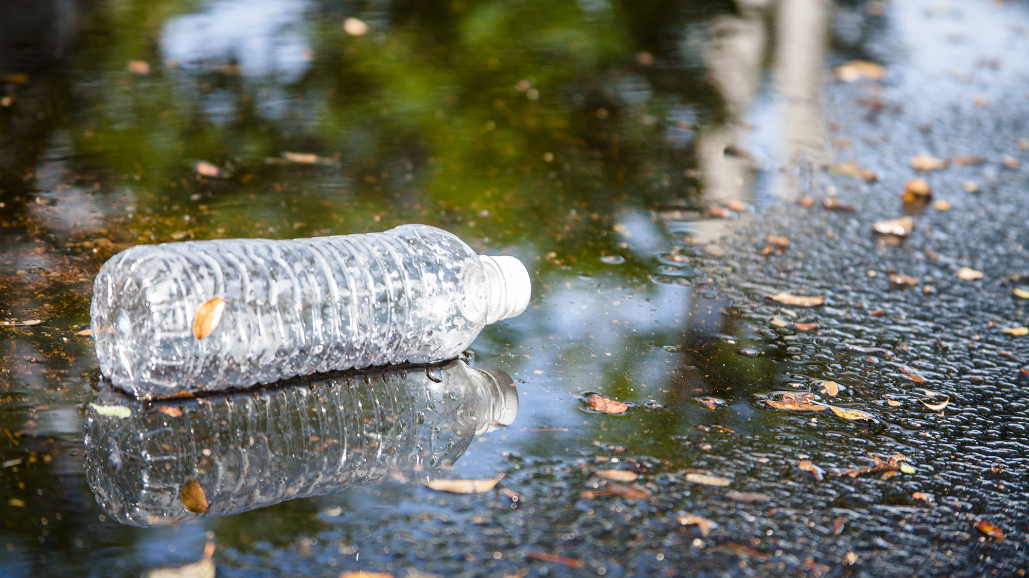 Plastic bottle in puddle