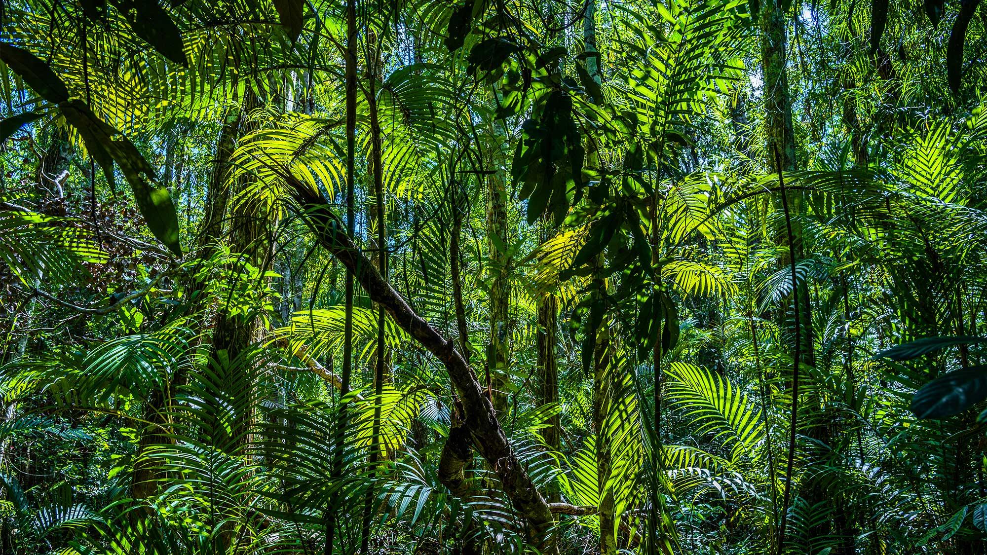 Jungle 1063340148 UK CW