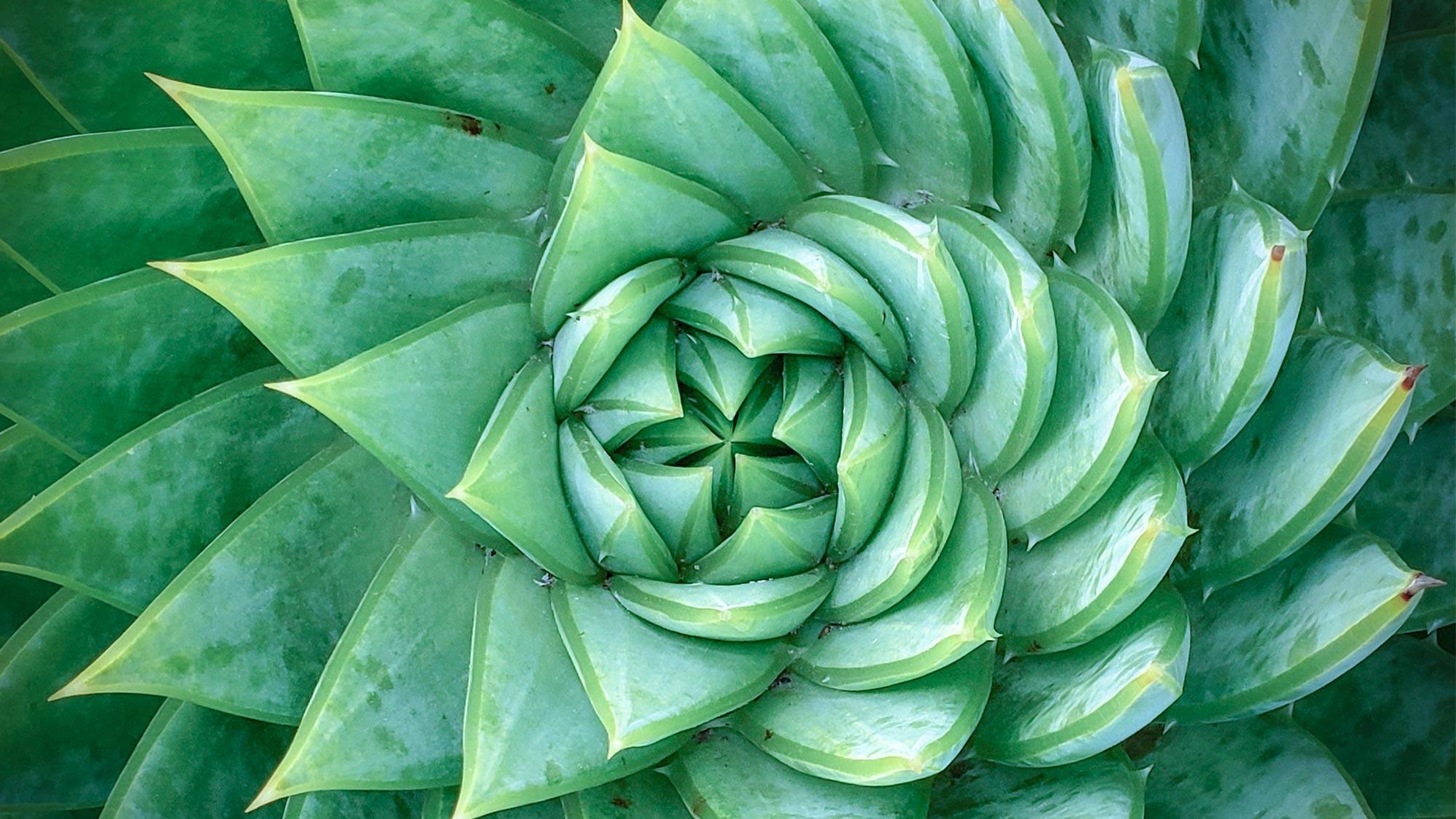 Plant 1146556855 UK CW