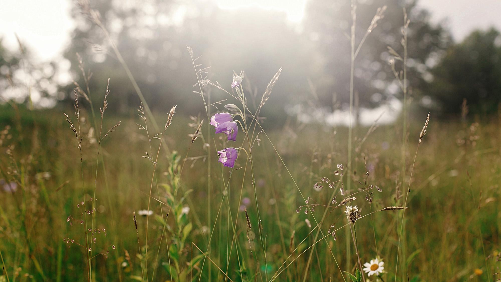 Meadow 1002757448 UK CW