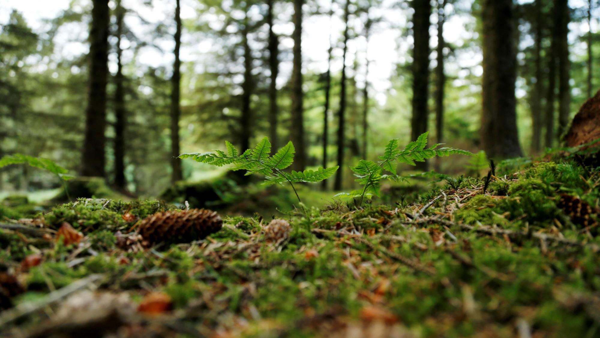 Forest floor 802748920 UK CW