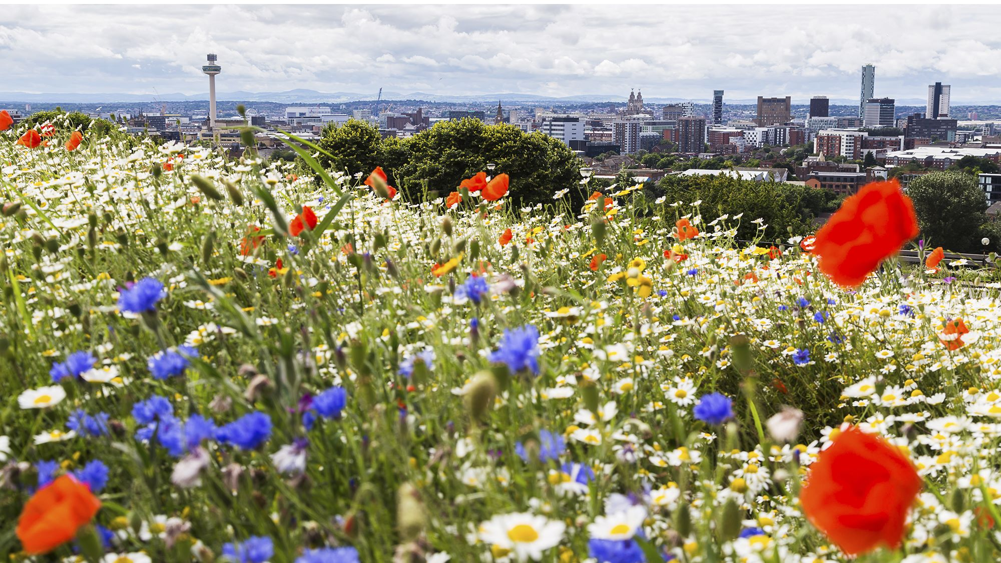 Liverpool across flowers