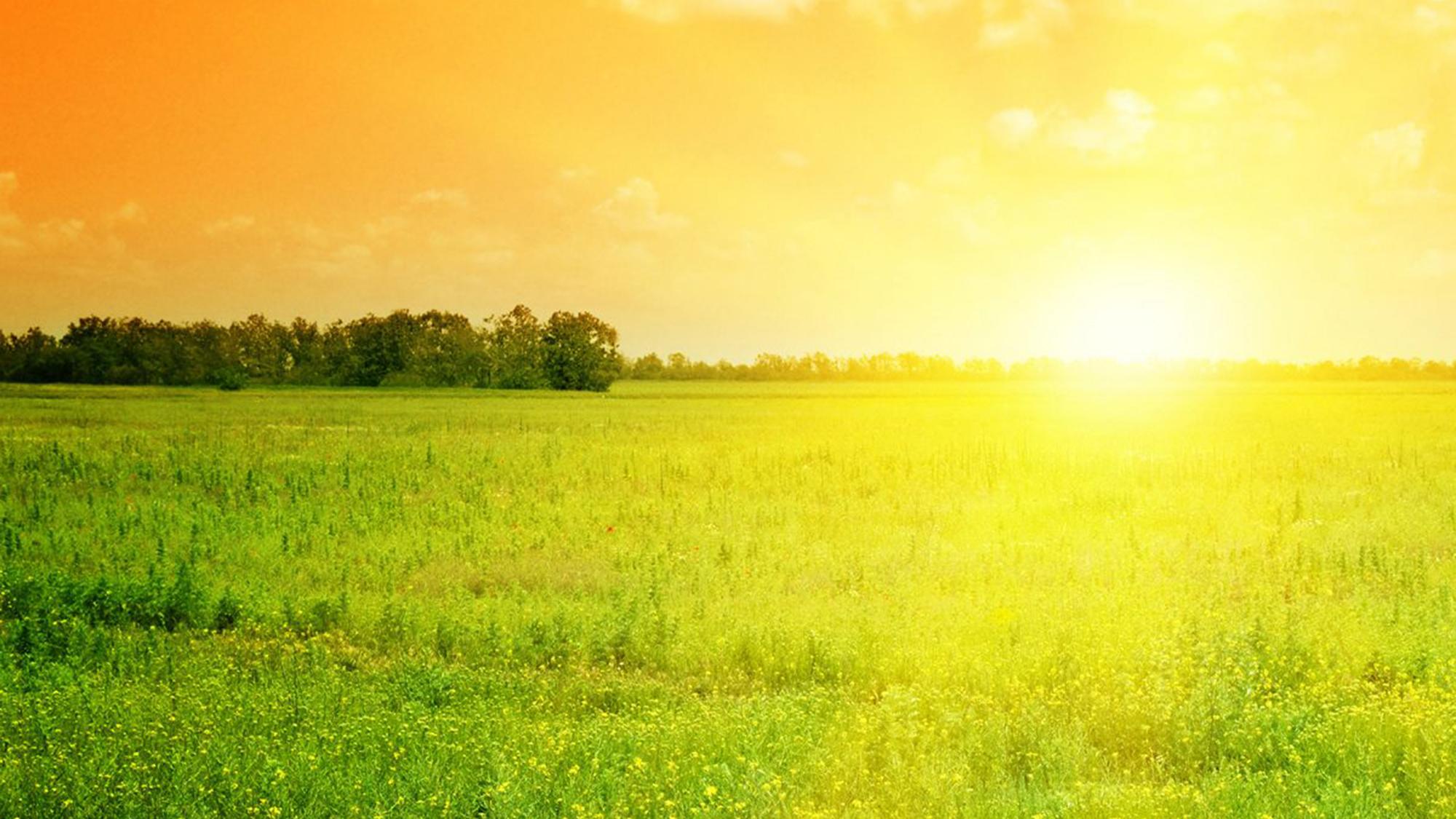 Sun over field